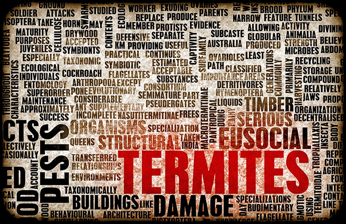 termites wording