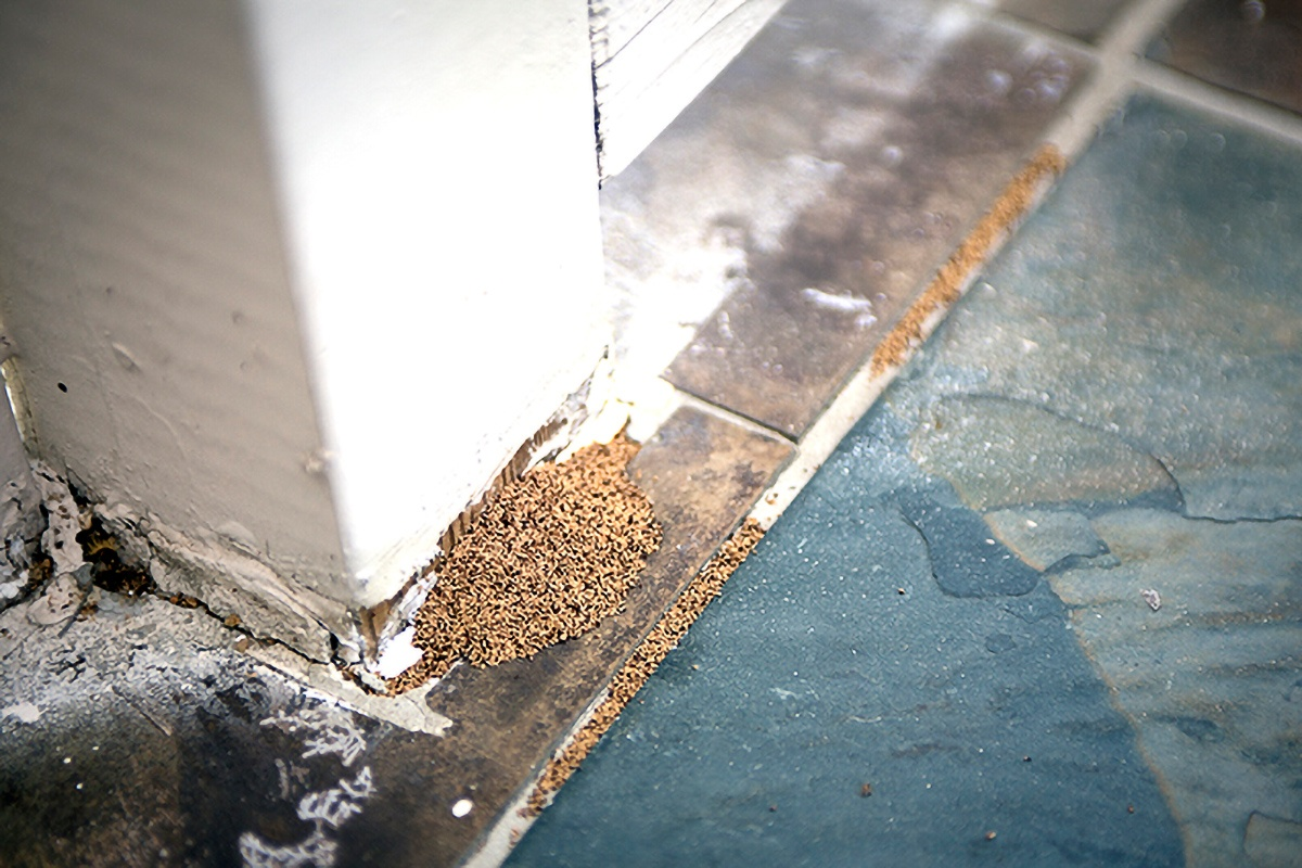 Termites on side of home